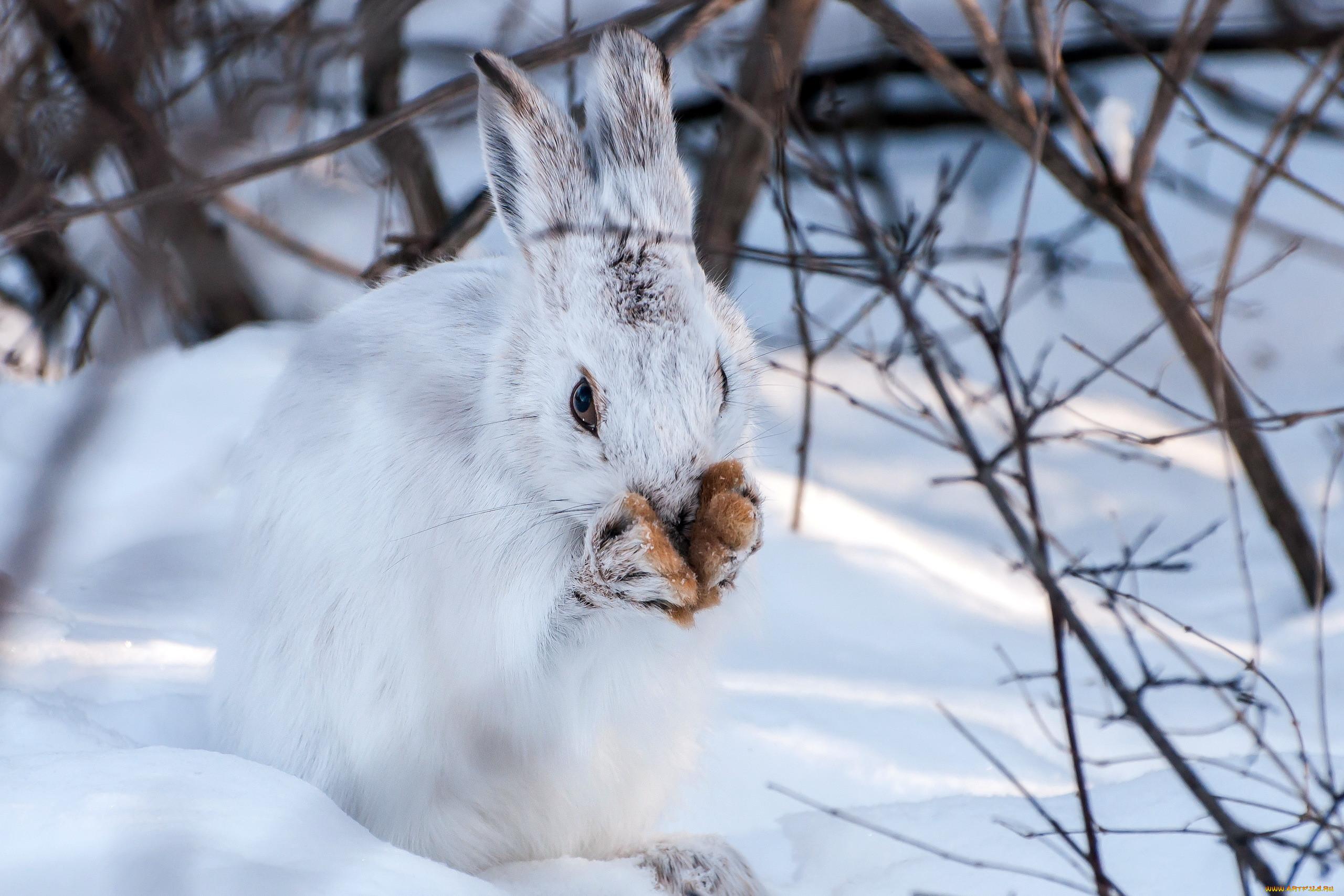 картинки животных в лесу зимой